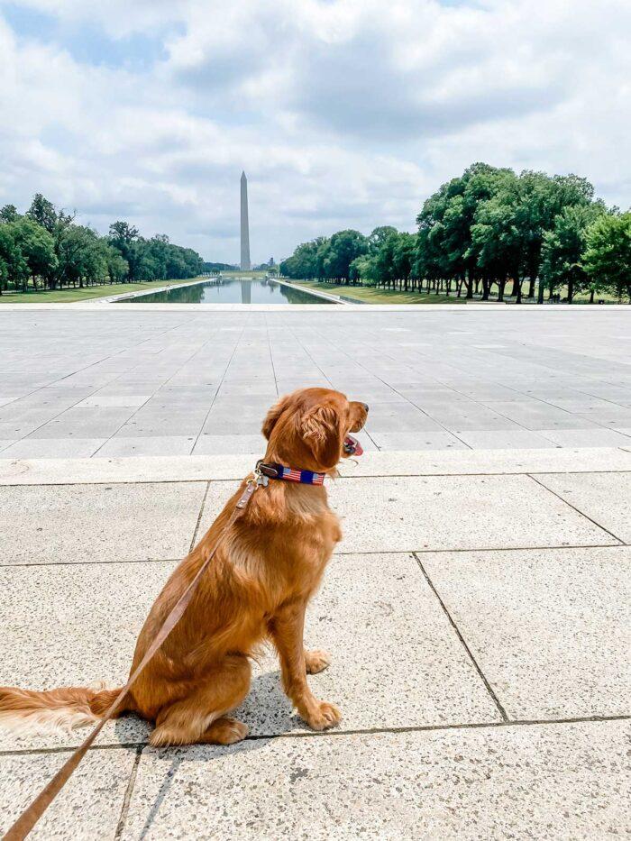 Family Road Trip - Washington D.C.